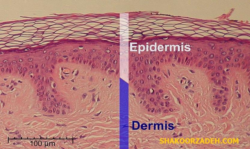 کلاژن پوست